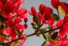 Авторская шелковая вышивка  Цветущая ветка сакуры (с подрисовкой)